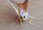 moth avatar